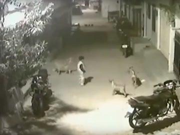 Un niño se enfrenta a varios perros en la India