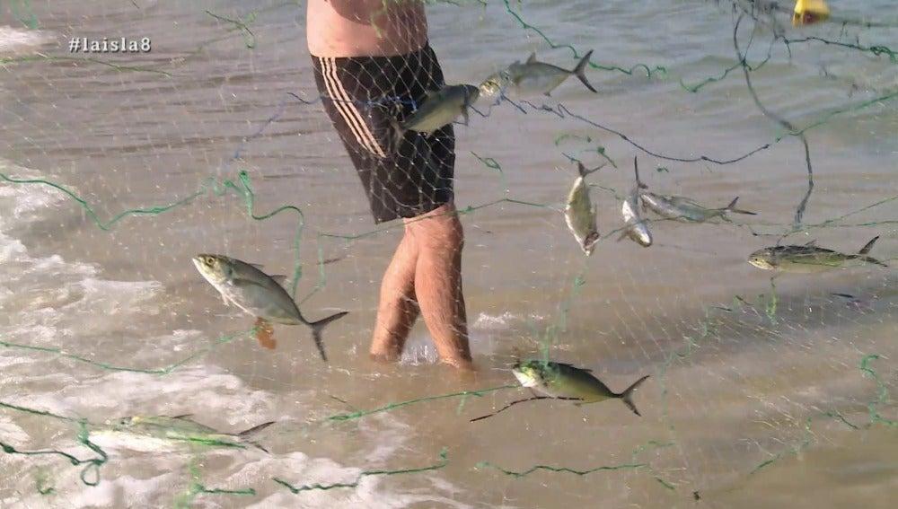 Peces en La Isla