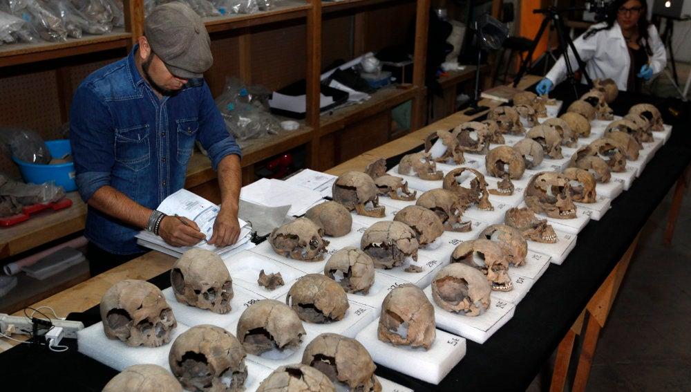 Antropólogos mexicanos estudian un conjunto de cráneos