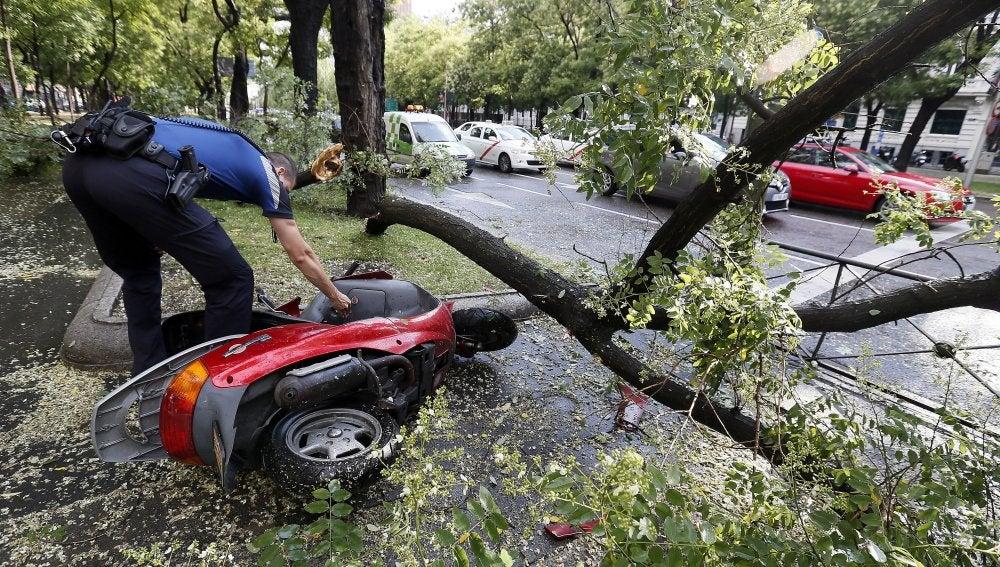 Una rama caída sobre una motocicleta en el Paseo de la Castellana