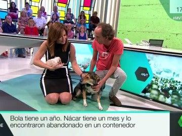 Nácar y Bola, dos perras que buscan familia tras ser abandonadas en un contenedor y en el monte