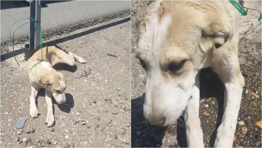 El animal abandonado en una carretera