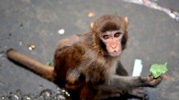 Imagen de archivo de un macaco