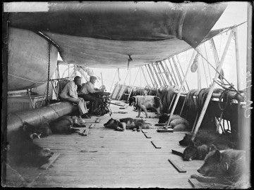 Perros en las primeras expediciones a la Antártida