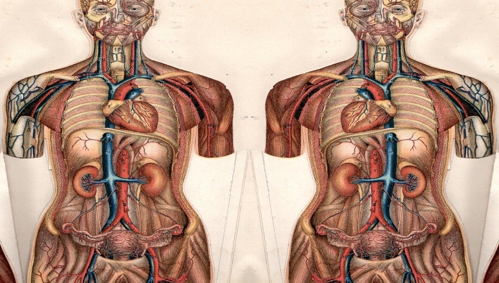 TECNOXPLORA | \'Situs inversus\', la anomalía que hace que los órganos ...