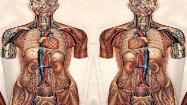 TECNOXPLORA   \'Situs inversus\', la anomalía que hace que los órganos ...