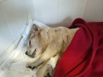 Imagen del animal rescatado en Tarragona