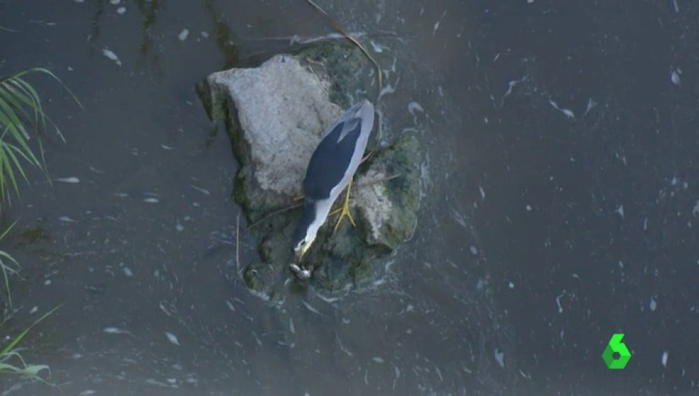 Toledo denuncia el peligro y el deterioro del Tajo por la contaminación de sus aguas y el poco caudal