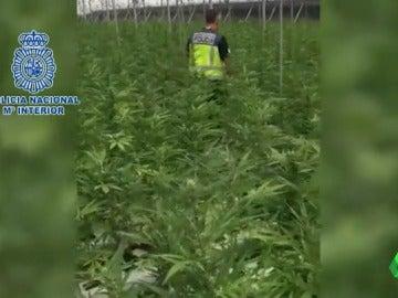 Un agente de la Policía Nacional inspecciona uno de los invernaderos de Granada