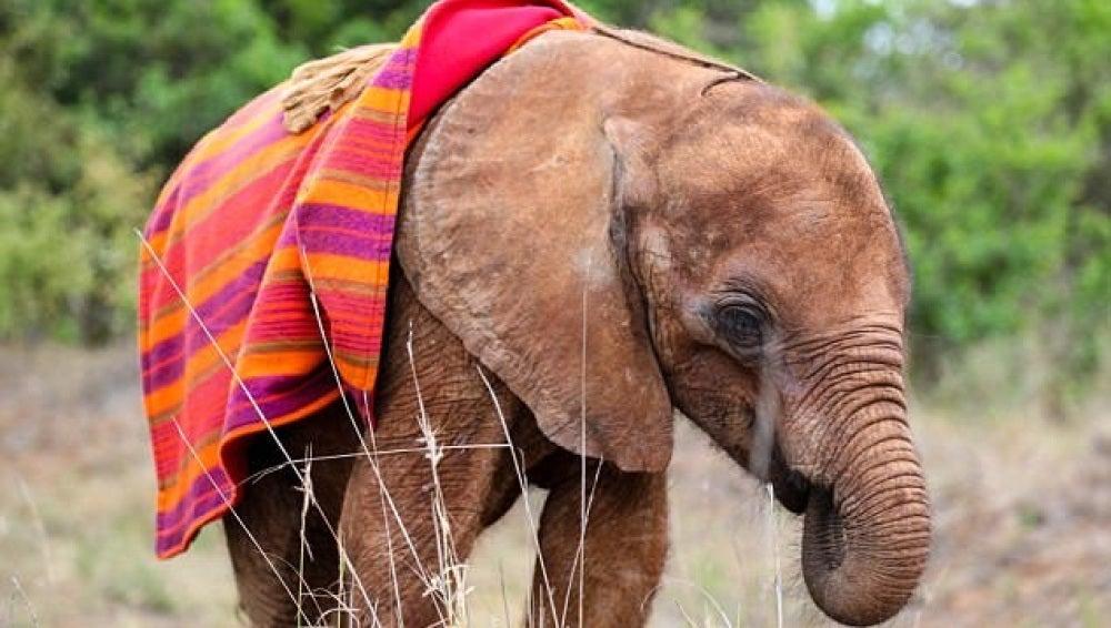 El pequeño elefante fue encontrado en Kenia por turistas