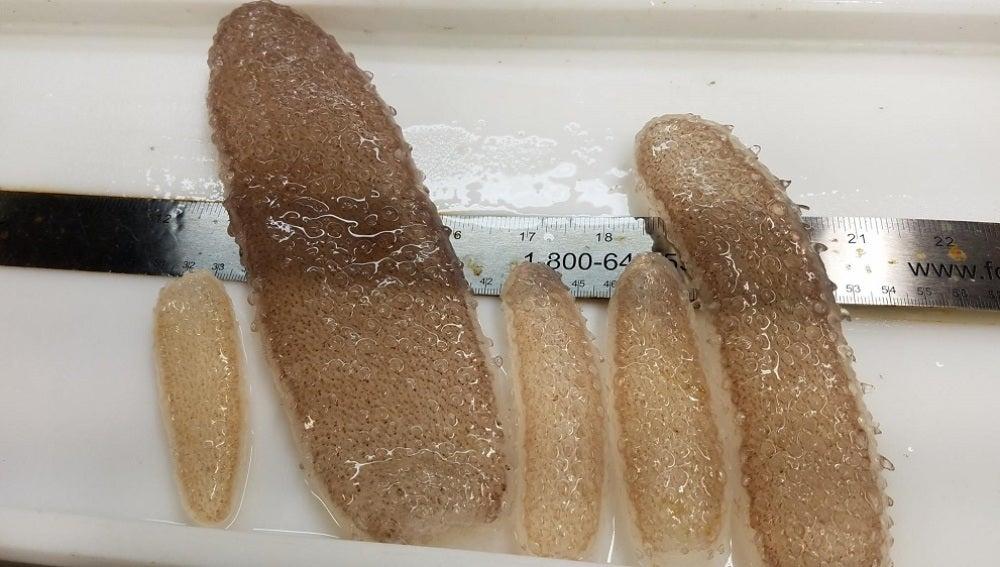 Aparecen unos misteriosos organismos gelatinosos en las playas de EEUU