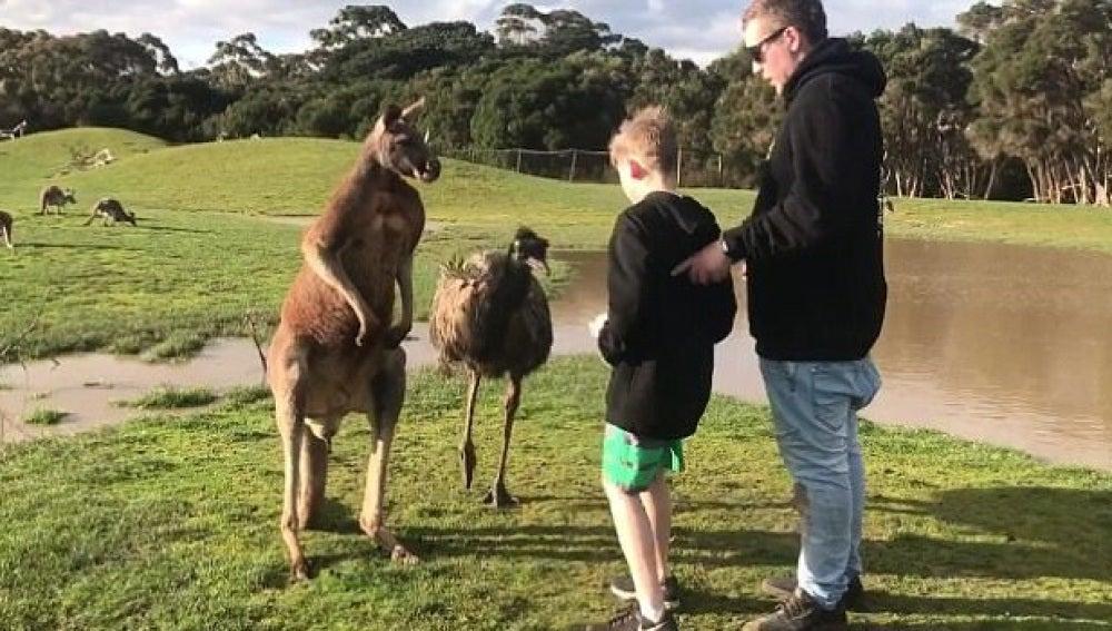 La inesperada reacción de unos padres cuando un canguro le pega un puñetazo a su hijo
