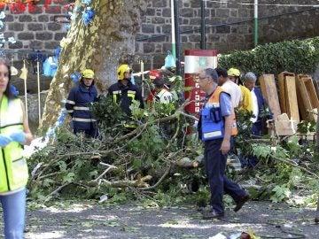 Árbol que se ha caído en Madeira matando a 11 personas