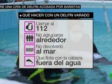 Llamar al 112 y no reintroducirlo en el mar, así es cómo debes actuar si te encuentras un animal varado en la playa