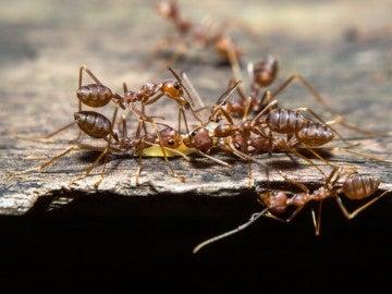 Un grupo de hormigas
