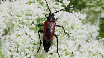 Los insectos aprovechan al máximo sus recursos, incluso sus excreciones