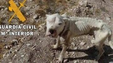El cachorro rescatado tenía síntomas de desnutrición, deshidratación y afección por leishmaniosis