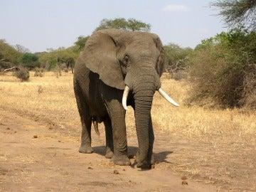 Imagen de archivo de un elefante
