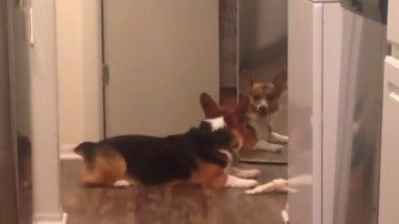 La adorable reacción de un perro al intentar compartir un hueso con su propio reflejo