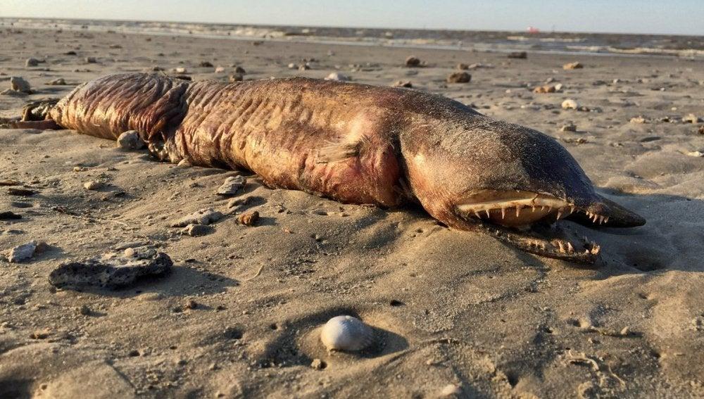 Criatura encontrada en una playa de Texas tras el paso del huracán Harvey