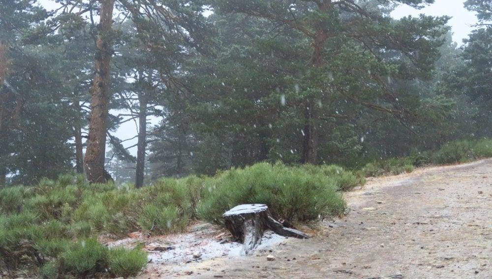 Así nieva en el Puerto de Navacerrada