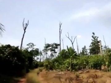 La deforestación en Costa de Marfil