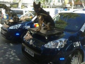 Dos perros policía