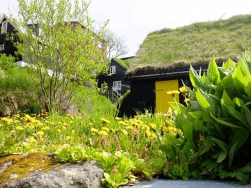 Tejado de una casa cubierto por vegetación