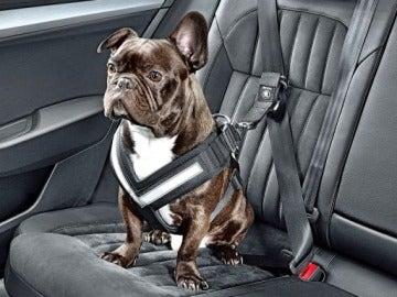 Qué puede pasar si llevas a tu perro suelto en el coche