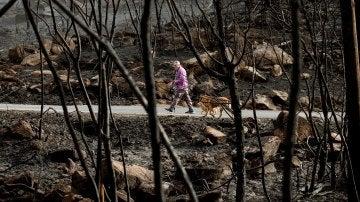 Terreno arrasado por las llamas en Melón, Ourense