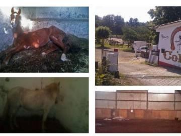 Caballos desnutridos en Vitoria