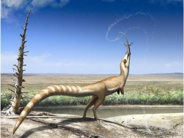 El sinosauropteryx, un dinosaurio con 'máscara'