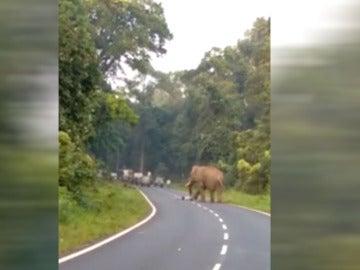 Un elefante aplasta a un hombre en La India