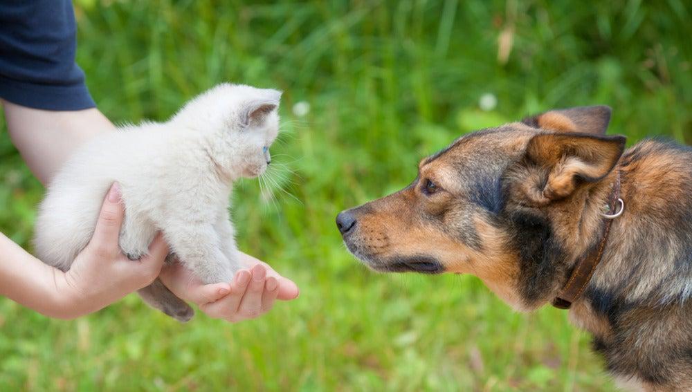 Gatos y perros