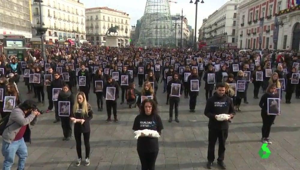 Igualdad Animal exhibe en en la Puerta del Sol cadáveres de cerdos, pollos y conejos para exigir más derechos animales