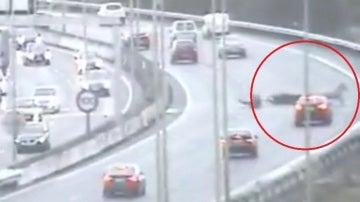 Un burro se cuela en plena autopista