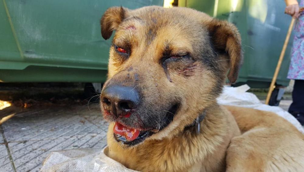 El perro maltratado en Oviedo