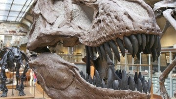 No todas las criaturas prehistóricas con apariencia de reptiles son dinosaurios