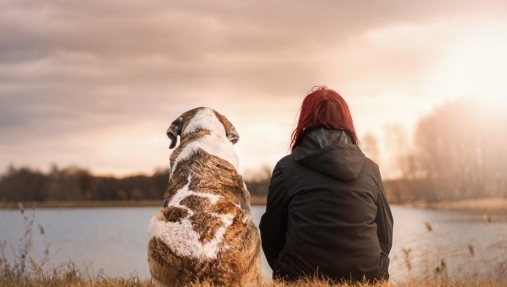 ¿Cuáles serán los criterios para otorgar la custodia de una mascota tras un divorcio?