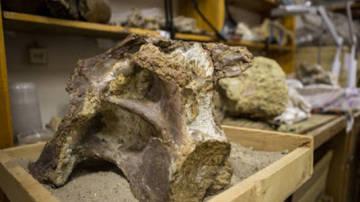 Fragmentos que pertenecen al dinosaurio