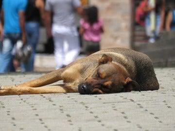 Imagen de un perro tumbado en la calle en una imagen de archivo