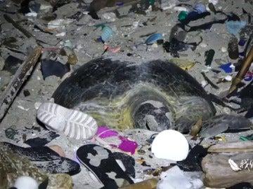 Las indignantes imágenes de una tortuga intentando anidar en una playa llena de basura