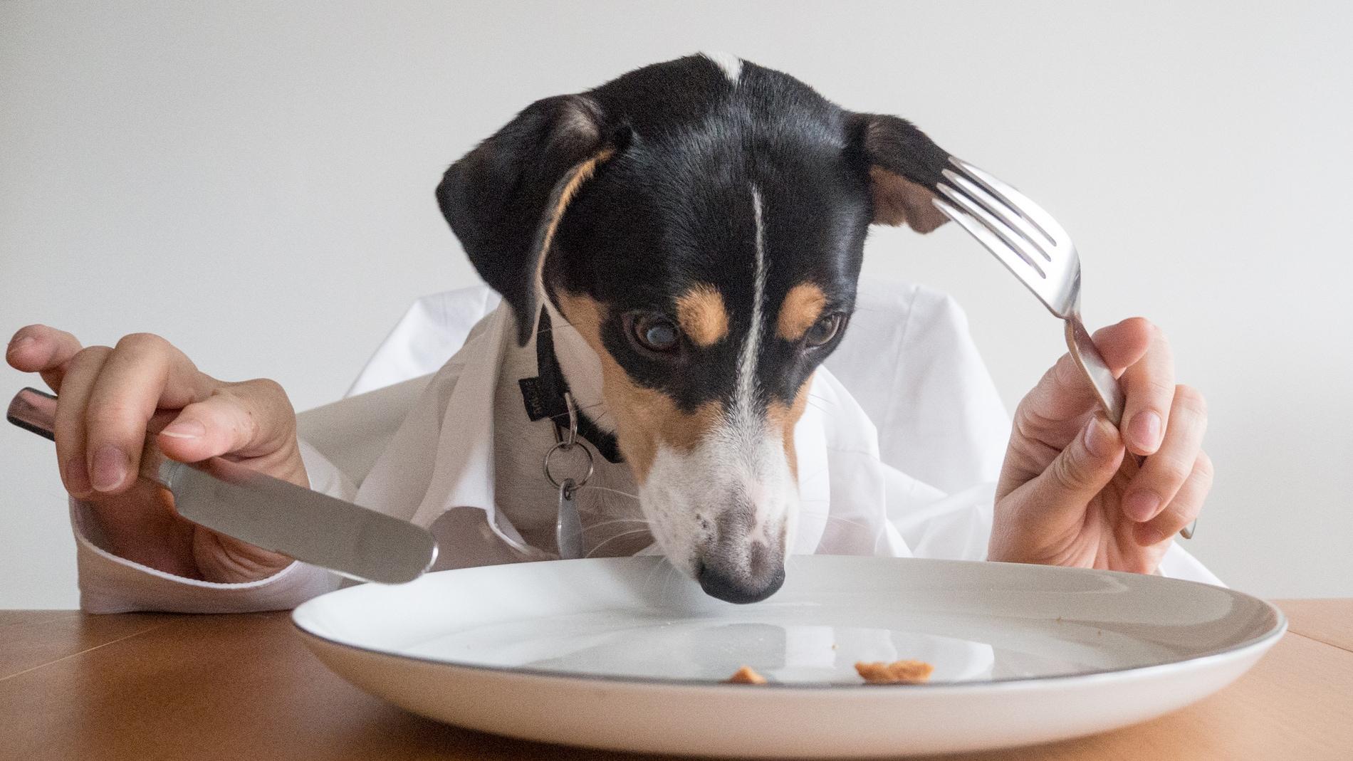 La carne cruda es un riesgo para tu perro