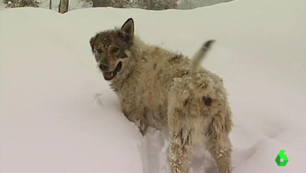 Un perro en la nieve