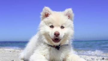 Foto de archivo de un perro