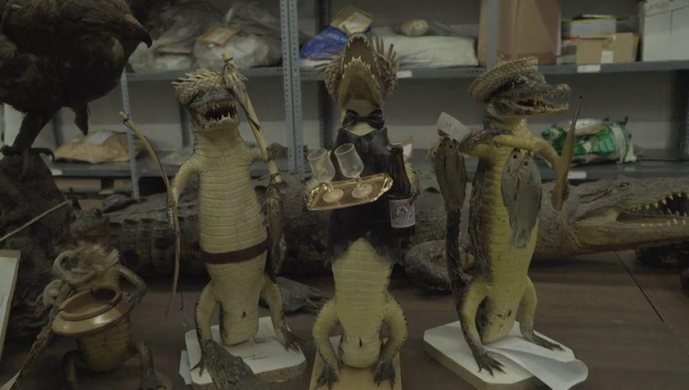 Crías de cocodrilo disecadas