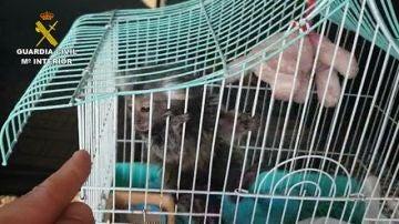 La Guardia Civil investiga a 11 personas por la venta ilegal de primates sin control sanitario