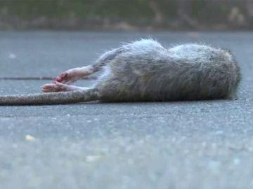 Las ratas invaden París