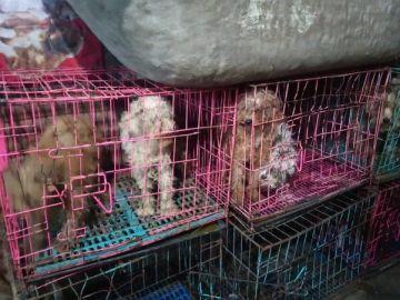Perros confinados en jaulas en China