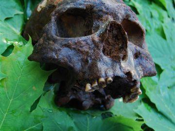 Uno de los cráneos de los restos humanos hallados en el cementerio submarino